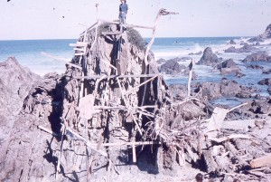 driftwood againt large rock