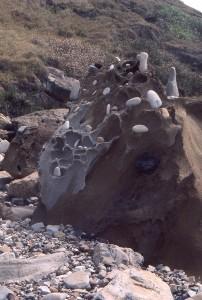 pebbeles on a rock